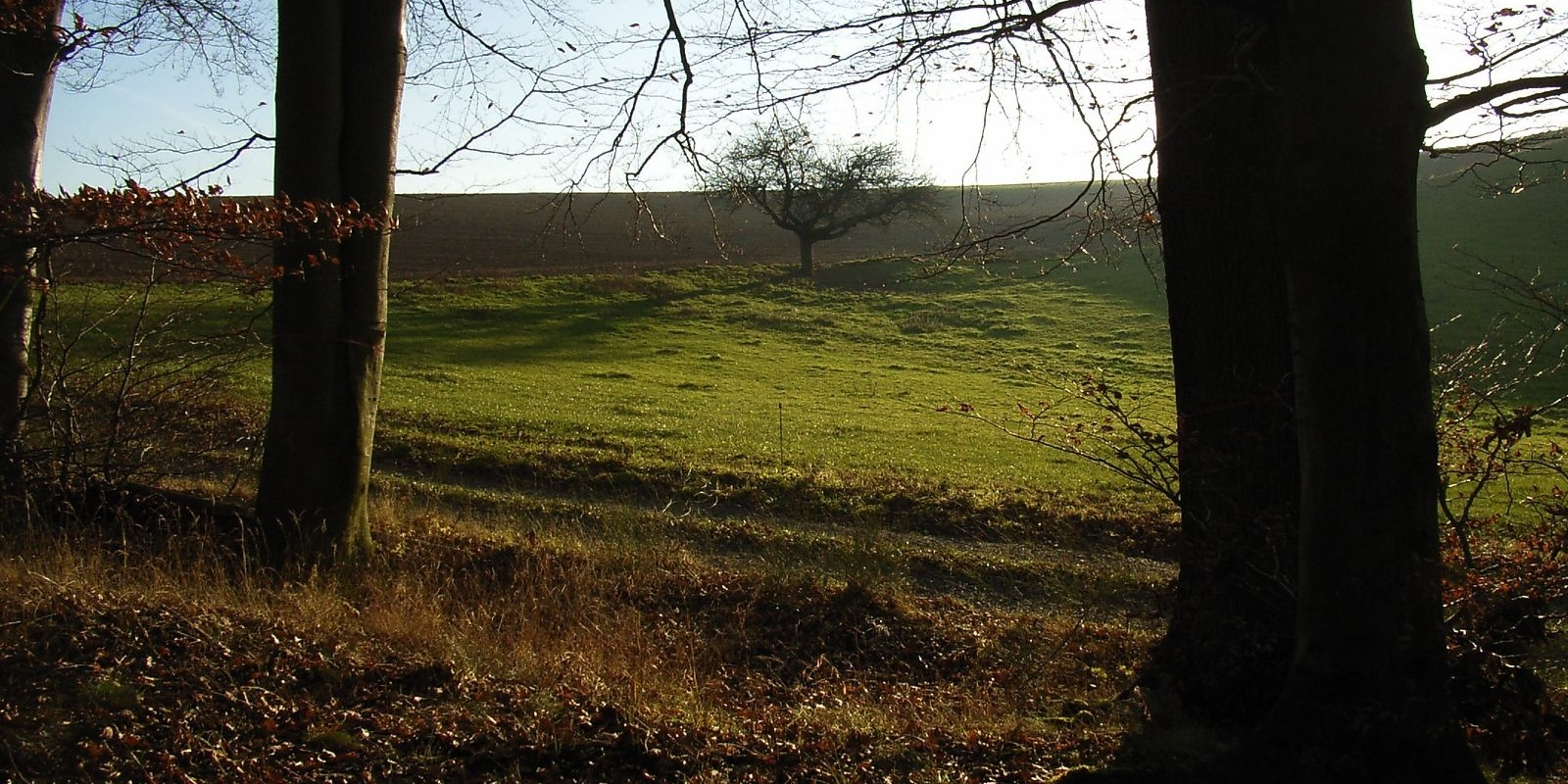 Am Waldrand im Bestattungswald 12 Apostel